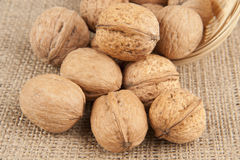 Walnuts spilled on sackcloth Stock Photography