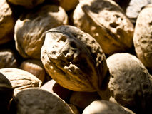 Walnuts. In the sunlight in autumn Stock Image