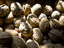 Walnuts. In the sunlight in autumn Royalty Free Stock Images