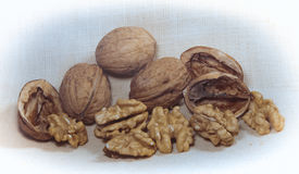 Walnuts. And walnut kernels on canvas background Stock Photos