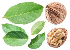 Walnuts and walnut leaves. Isolated on white background. Royalty Free Stock Images