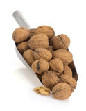 Walnuts on white Royalty Free Stock Photos