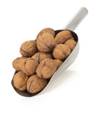 Walnuts on white Stock Photo