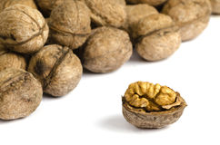 Walnuts on white background with shadow. Close up Stock Images