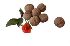 Walnuts on white Stock Photography