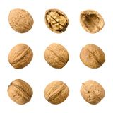Walnuts, whole and opened, isolated on white background royalty free stock photos