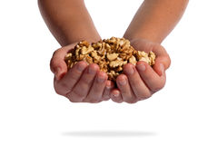Walnuts in woman hands Stock Photo