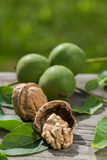 Walnuts. On a wooden background Stock Photography