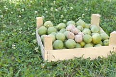 Walnuts in a wooden box Stock Image