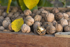 Walnuts in a wooden box Stock Photo