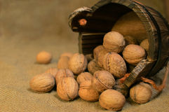 Walnuts in a wooden bucket Royalty Free Stock Photo