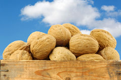 Walnuts in a wooden crate Royalty Free Stock Image