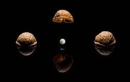 Walnuts wooden, season, nuts, christmas, pile, nutty, pearl, gem, jewel Stock Image