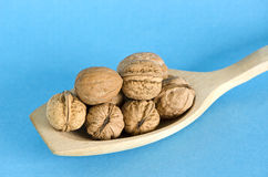 Walnuts in wooden spoon Stock Images