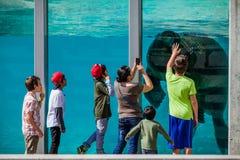 Walroß in einem Zoo während eines schönen Tages des Sommers am Aquarium Lizenzfreies Stockfoto