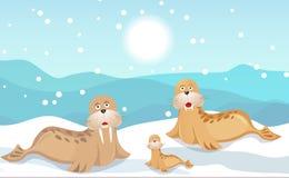Walrossfamilie Stockbild