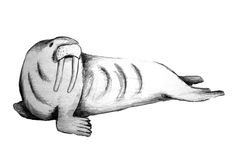 Walrus. Isolated hand drawn illustration of a walrus Stock Photo