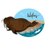 Walrus. Animal nature sea rock wave mammal Royalty Free Stock Photography
