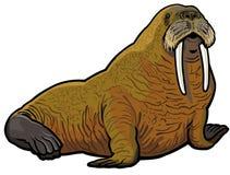 Walrus Stock Image