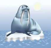 Walrus. Sailing on the sea on ice floe; vector illustration Royalty Free Stock Photo