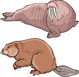 Walrus and beaver. The illustration shows a walrus and beaver. Illustration done in on separate layers Stock Illustration