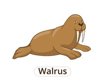 Walrus cartoon vector illustration Stock Photography