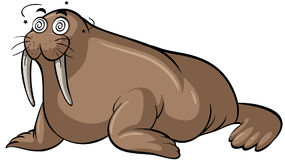 Walrus with dizzy face Royalty Free Stock Image