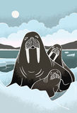 Walrus Family Royalty Free Stock Photo