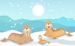 Walrus family. Cute happy Walrus family vector color image stock illustration