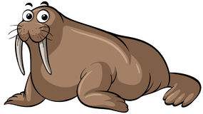 Walrus with happy face Royalty Free Stock Image