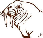 Walrus Head Royalty Free Stock Photos