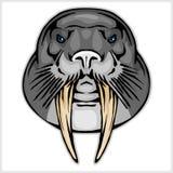 Walrus head mascot Stock Photos