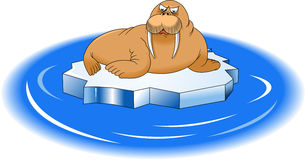Walrus and ice floe Royalty Free Stock Images