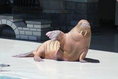 Walrus (Opgeheven Vin) Stock Foto's