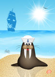 Walrus sailor Stock Photography