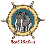 The Walrus Stock Images
