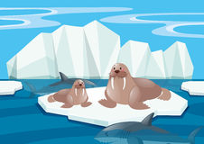 Walrus and shark in north pole. Illustration Stock Image