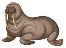 Walrus with sharp teeth royalty free illustration