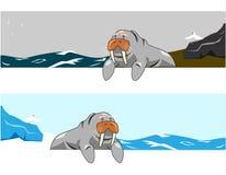 Walrus vector Stock Photos