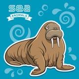 Walrus. Vector illustration of a walrus Stock Photos