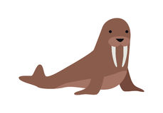 Walrus Vector Illustration in Flat Design. Walrus flat style vector. Wild herbivorous animal. North fauna species. For nature concepts, children s books Stock Images