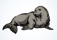 walrus Vector tekening stock illustratie