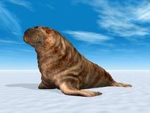 Walrussen Royalty-vrije Stock Fotografie