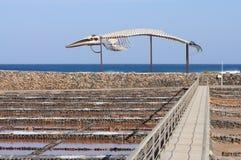 Walskelett und salziges, Fuerteventura Lizenzfreie Stockfotos