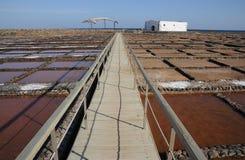 Walskelett und salziges in Fuerteventura Spanien Stockfotos