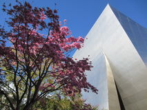 Walt Disney Concert Hall Los Angeles, CA. A flowering tree contrasts with the dramatic architecture of the Walt Disney Concert Hall, Los Angeles, CA, designed by Stock Photography