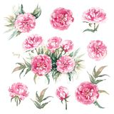 Walter Faxon Peony. Isolated set of vivid pink peonies with double flowers, buds and leaves. Vintage greeting card. Walter Faxon Peony. Isolated set of vivid vector illustration