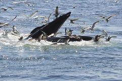 walvis Stock Afbeeldingen