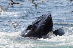 walvis Stock Afbeelding