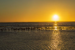 Walvis Bay, Namibia Royalty Free Stock Photography